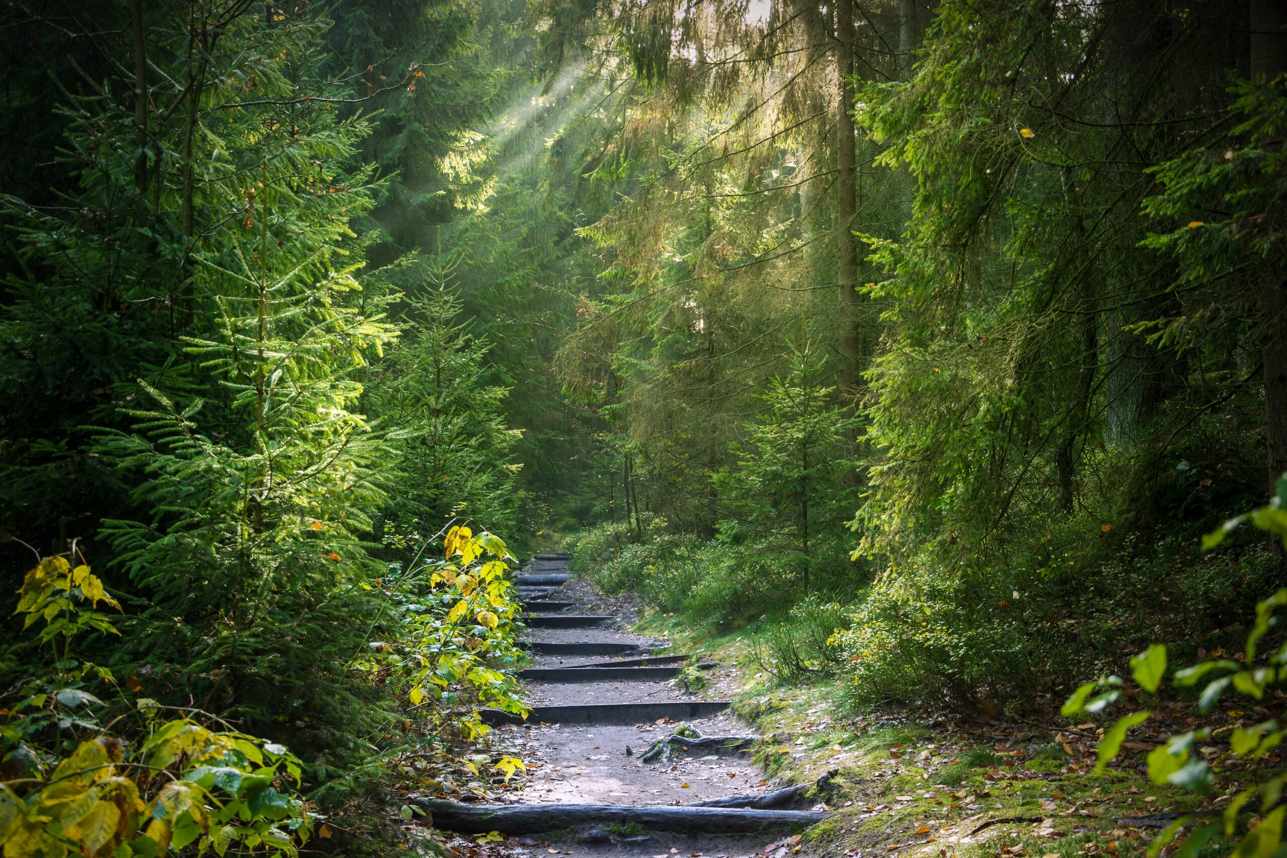 Forest path with wooden steps
